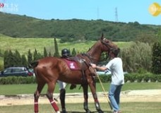 Polo Easter Tournament at Dos Lunas Polo Club – April 2013